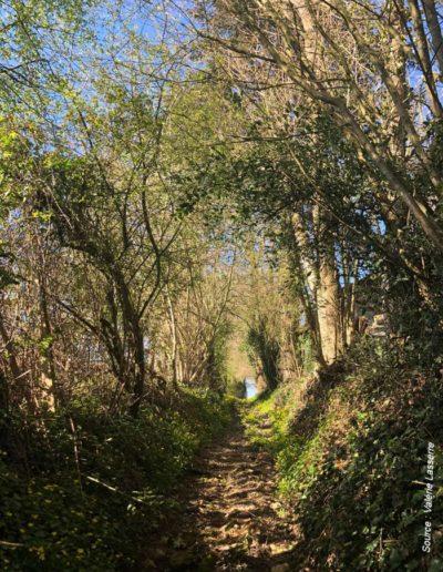 paysage perche - chemins-creux