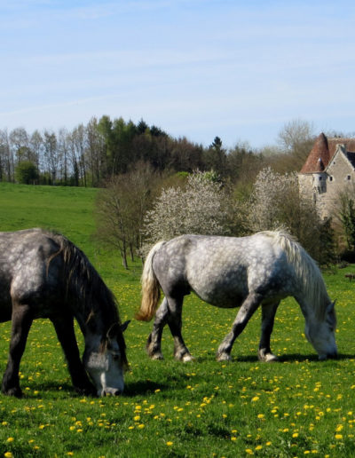 gite - la pause du perche - percherons - manoir de courboyer